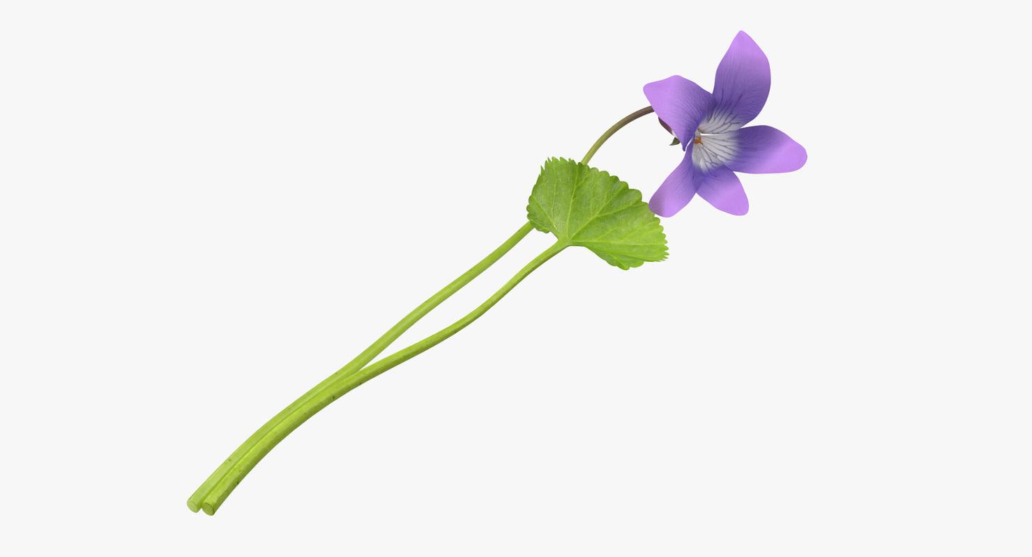 violet single laying - max