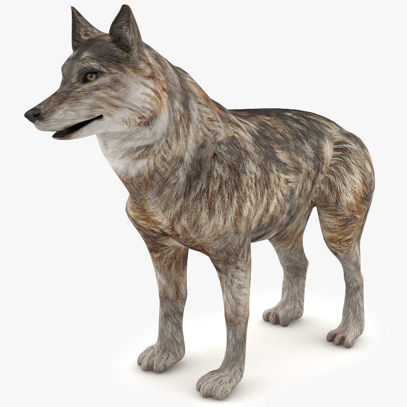 3d model wolf dog animal
