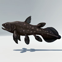 Coelacanth Rigged - Rare Dinosaur Extinct Fish 1