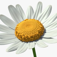 3d rigged chamomile flower model