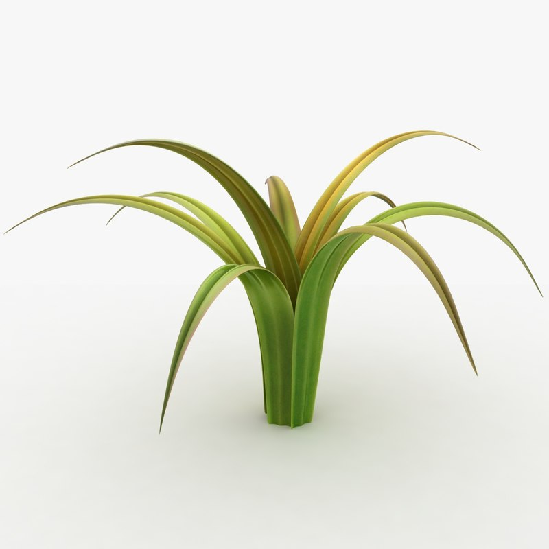 3d realistic grass leaves colorful