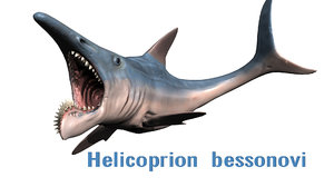 ancient shark helicoprion 3d obj