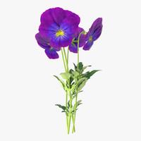 pansies bouquet - 3d model