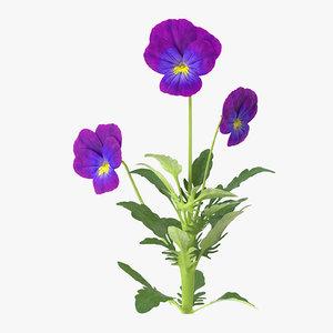 3d model pansies natural group -