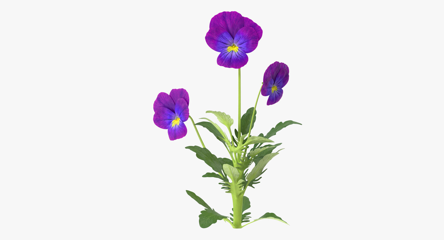 3d model pansies natural group -