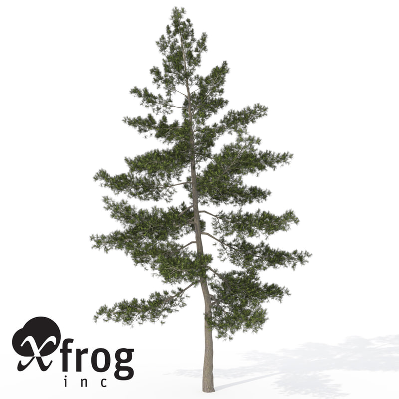 xfrogplants ohio buckeye tree 3d max