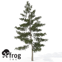 xfrogplants eastern white pine 3d model