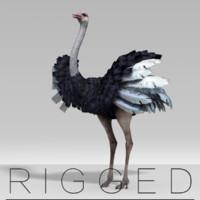 Ostrich  rigged