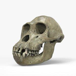 chimpanzee skull max