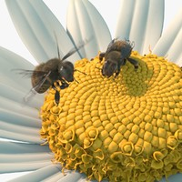 Bee Flower Rigged Animated