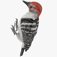 woodpecker toy 3d model