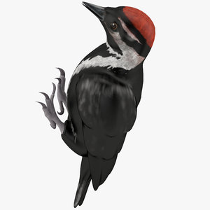 3d woodpecker toy