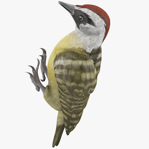 3d woodpecker toy model