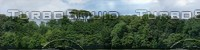 HDR treeline background