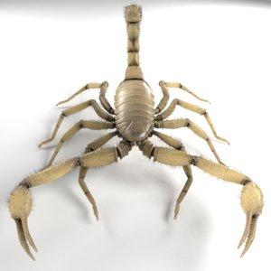 3d scorpion hadrurus arizonensis