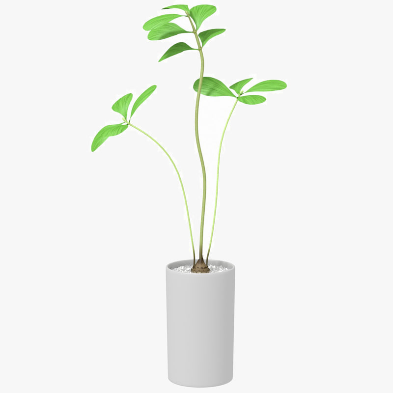 max plant potted