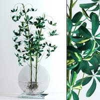vase schefflera flowers max