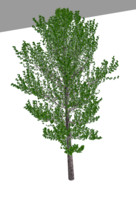 tree 3d blend