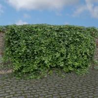 3ds ivy plant