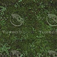 moss ground texture