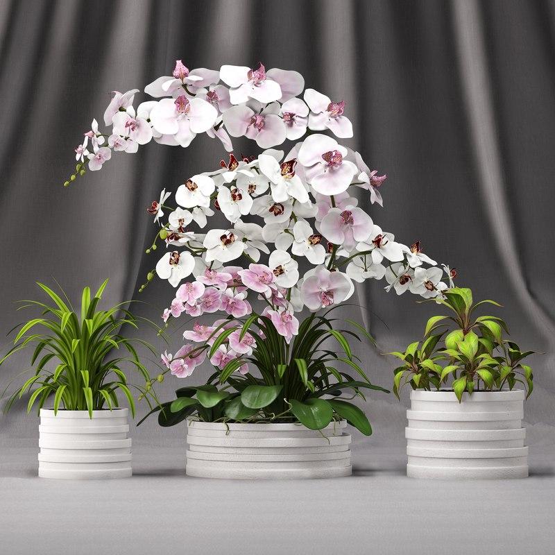 3d model orchid arrangement