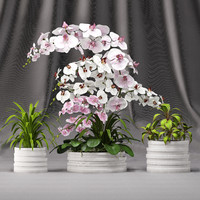 3d model orchid arrangement