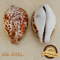 3d model sea shell seashell