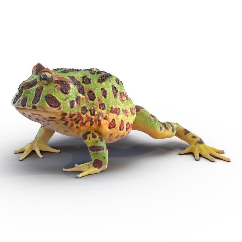 max pacman frog pose 2