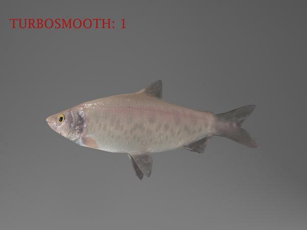 max coregonus peled