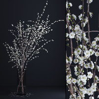 Prunus White Blossom