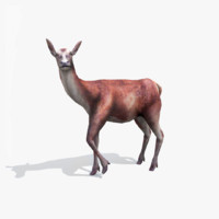 3d deer animation model
