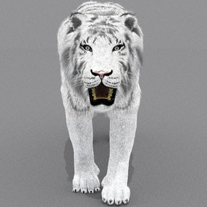 zbrush white tiger cat fur max