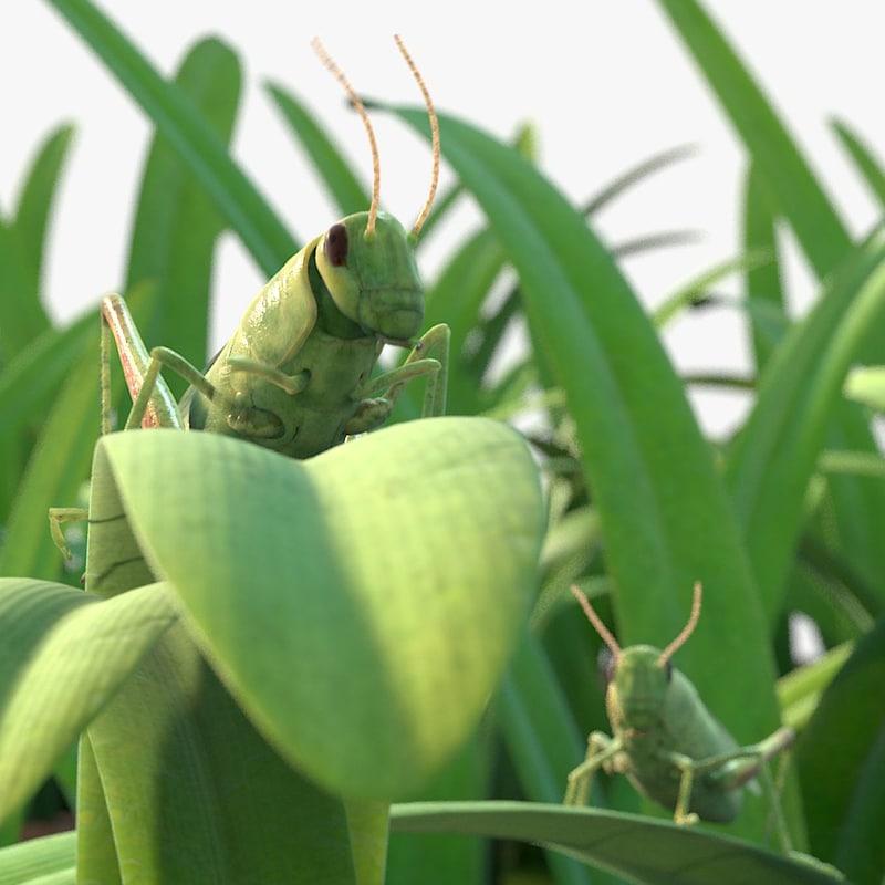 fbx rigged grasshoppers grass field