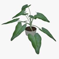 small plant 3d max