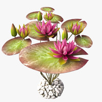 lily water pink 3d x
