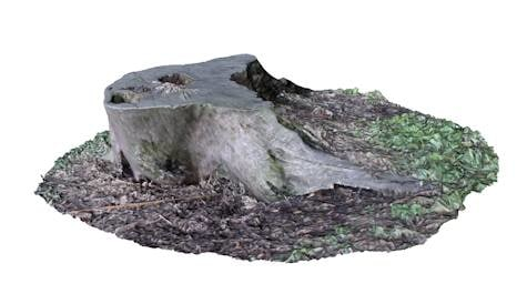realistic tree stump 3d c4d