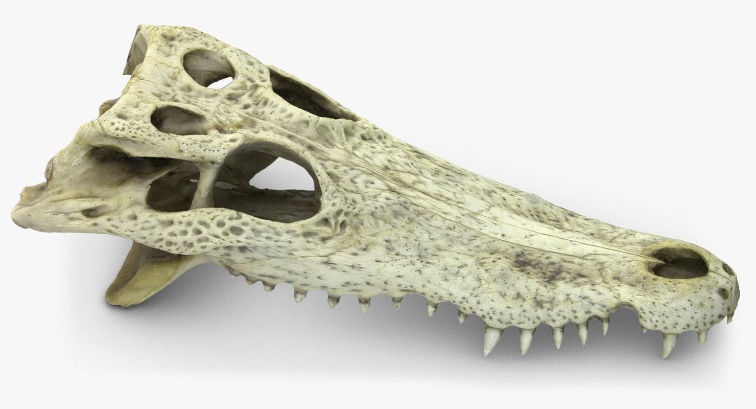 crocodile skull scan 3d obj
