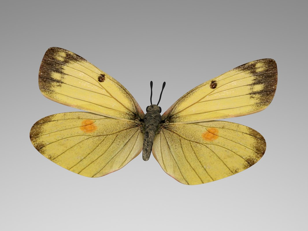 butterfly wings 3d model