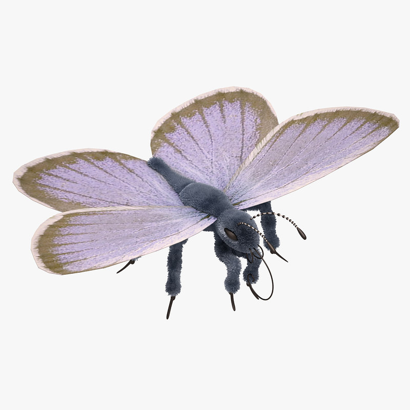 blue butterfly close 3d model