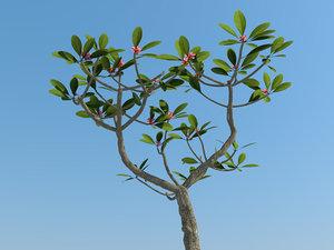 tropical tree plumeria 3d max
