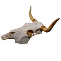 3d bull skull model