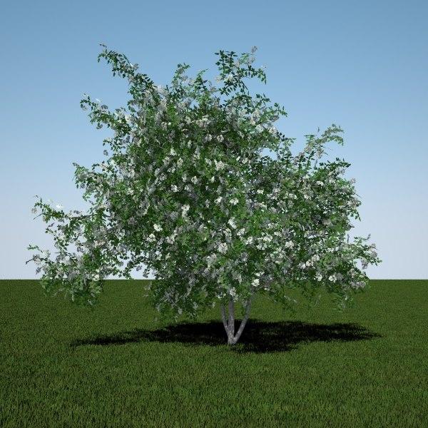 mayflower midland 3d model
