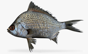 black axillary mojarra 3d model