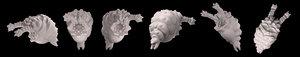 3d model larva