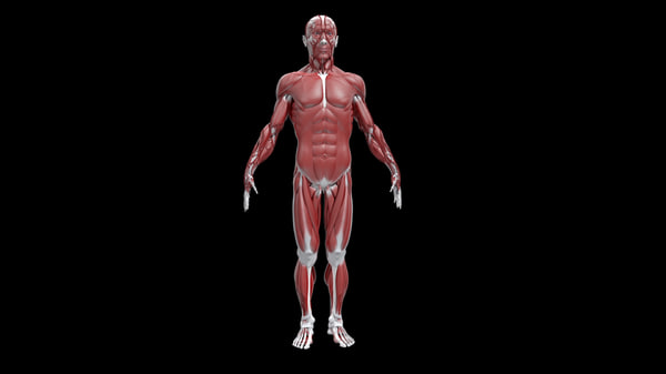 study anatomy human ma