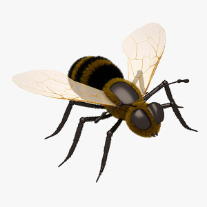 3d honey bee close