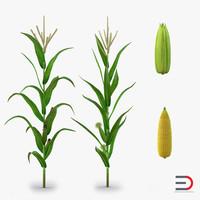 max corn plant field