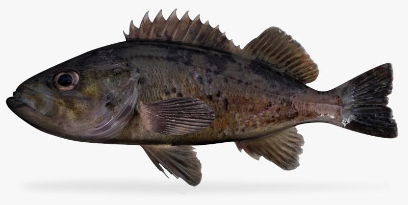 black rockfish 3d model