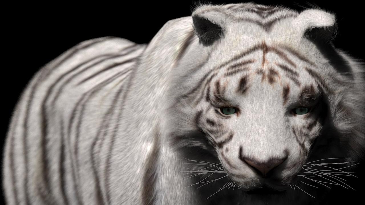 rigged fur white tiger 3d model