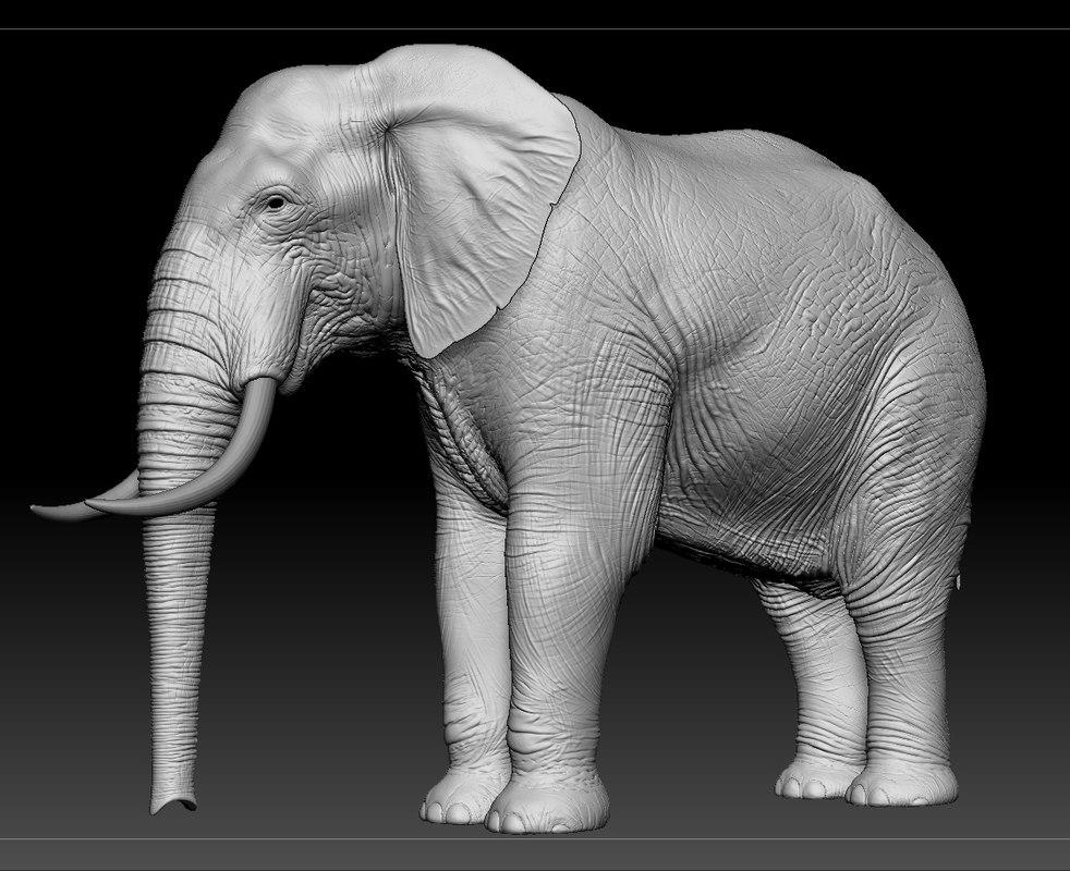 elephant zbrush obj